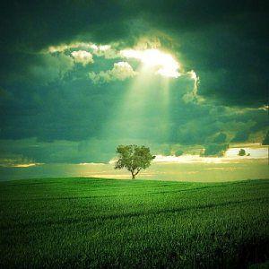 arbre-et-lumiere.jpg
