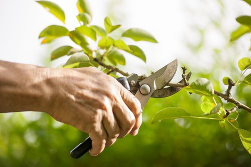 John Bates Garden Services is designed to provide year round garden care.