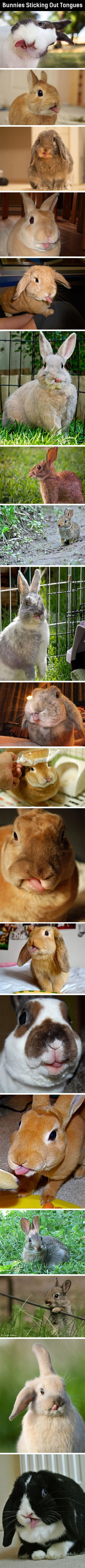 Related pictures split tongue jpg pictures to pin on pinterest -  Bunnies Sticking Out Tongues It Will Melt Your Heart Find Even
