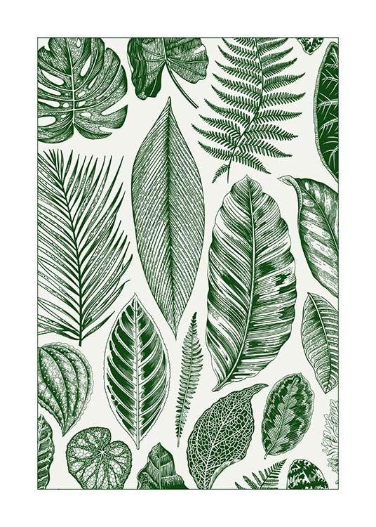 Poster met palmblad...