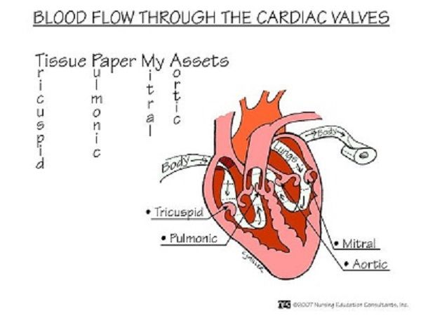 Cardiac Blood Flow - Nursing Mnemonics. See more: http://www.nursebuff.com/2014/06/nursing-mnemonics/