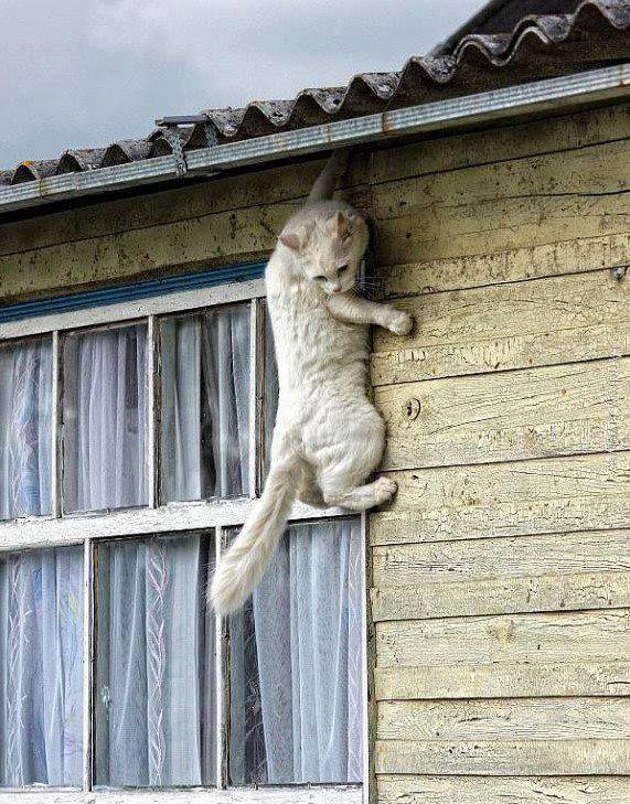 Un sacré grimpeur !