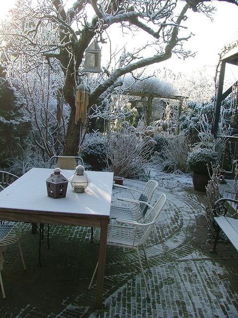 177 best images about winter gardens on pinterest chris for Garden design winter 2018