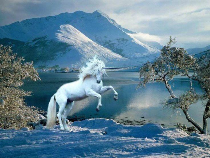 unicorn in the Scottish HIghlands