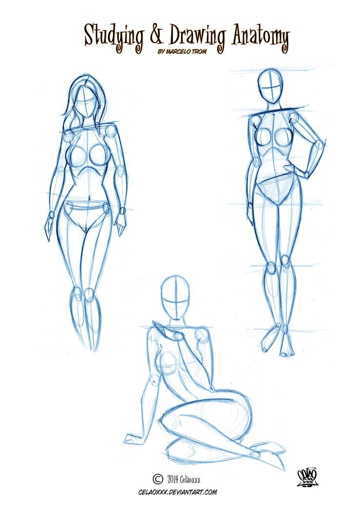 25+ best ideas about Anatomy drawing on Pinterest   Human drawing ...