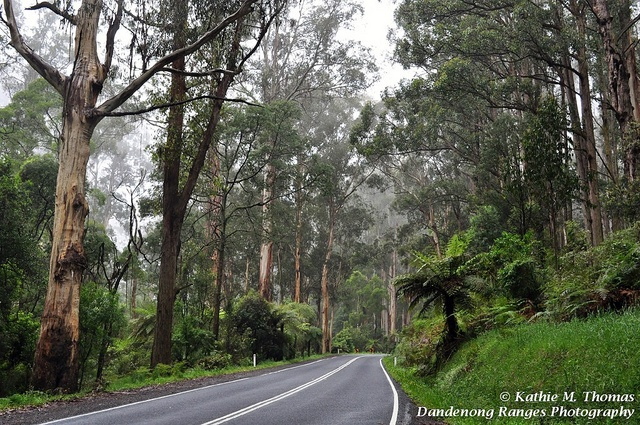 Sherbrooke Forest, Monbulk Road.  I live near here and it's a beautiful place to visit.