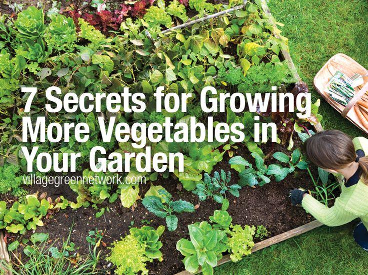7 Secrets for More Vegetables in Your Garden