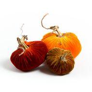 Velvet Pumpkin Harvest Trio