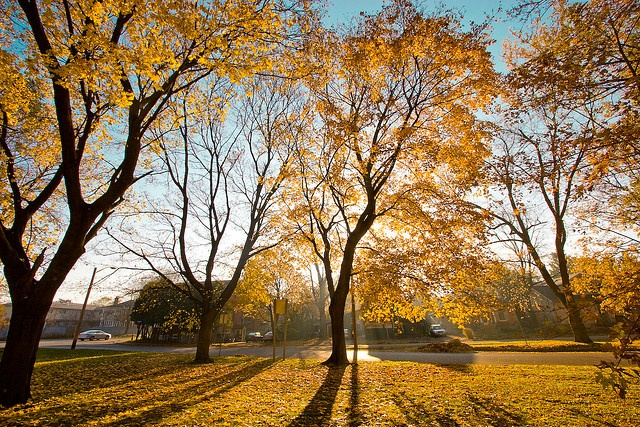 Royal City Park