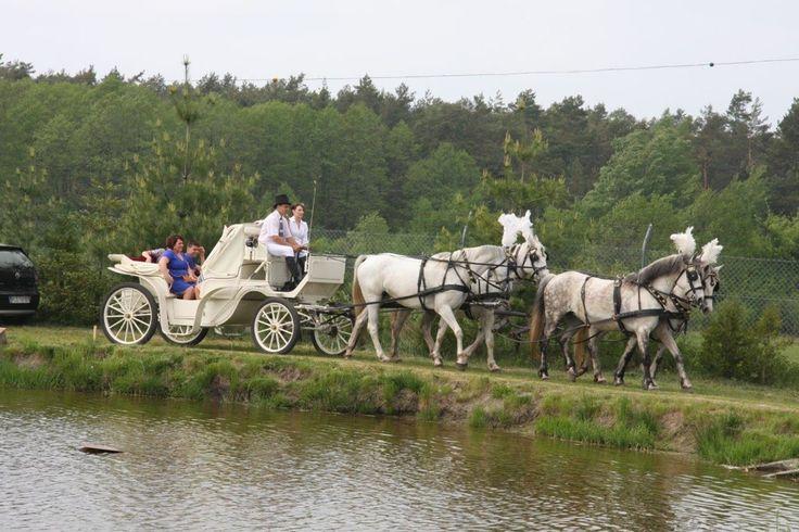 Białą bryczką do ślubu