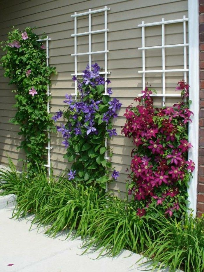 garden design garden ideas Creepers | Climbing flowers, Flower garden, Backyard landscaping