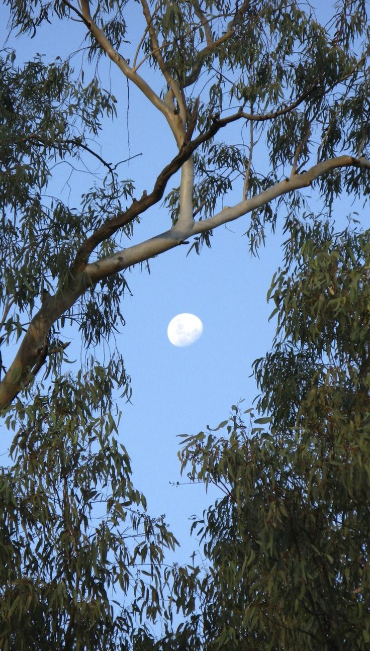 #koroit #opal #queensland #australia #moon