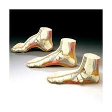 3d model human foot - Google Search