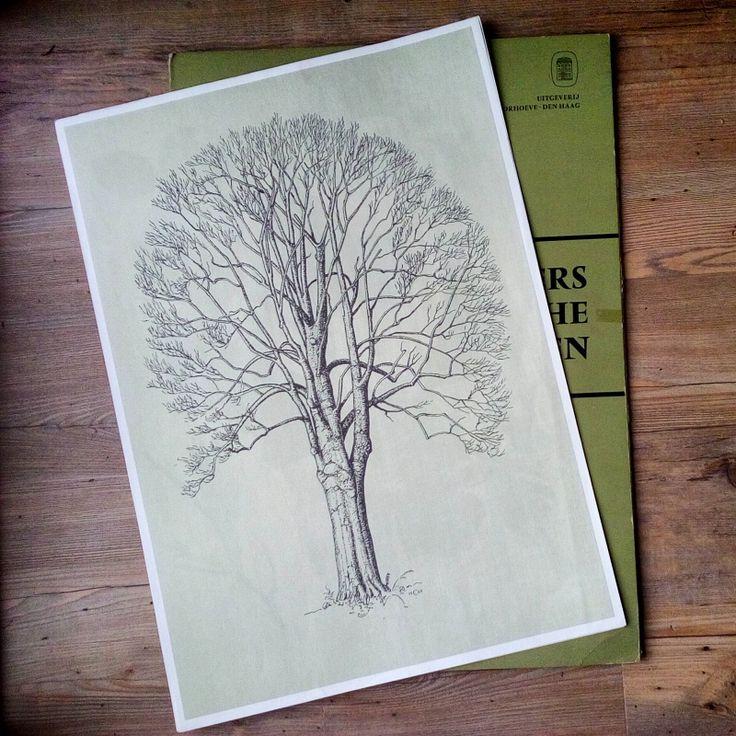 Vintage schoolplaat wandplaat vogels cramers biologische wandplaten botanisch den spar zilverspar paardenkastanje ratelpopulier beuk  5 vintage botanical print poster trees