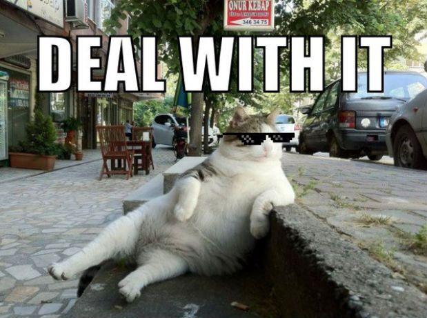 deal-with-it-cat11.jpeg 619×461 pixels