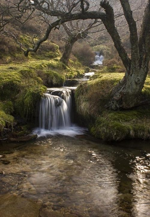 Woodland waterfall: