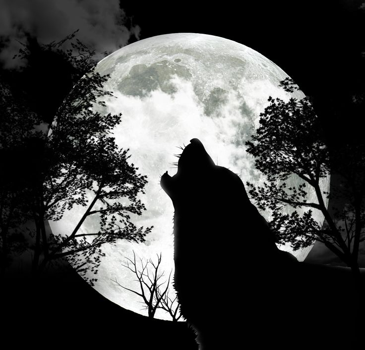 wolf-howling-at-the-moon1.jpg (2180×2092) the moon has always impressed me and was involved in the most beautiful moment in my life and wolves represent fierce devotion which Is a huge deal to me