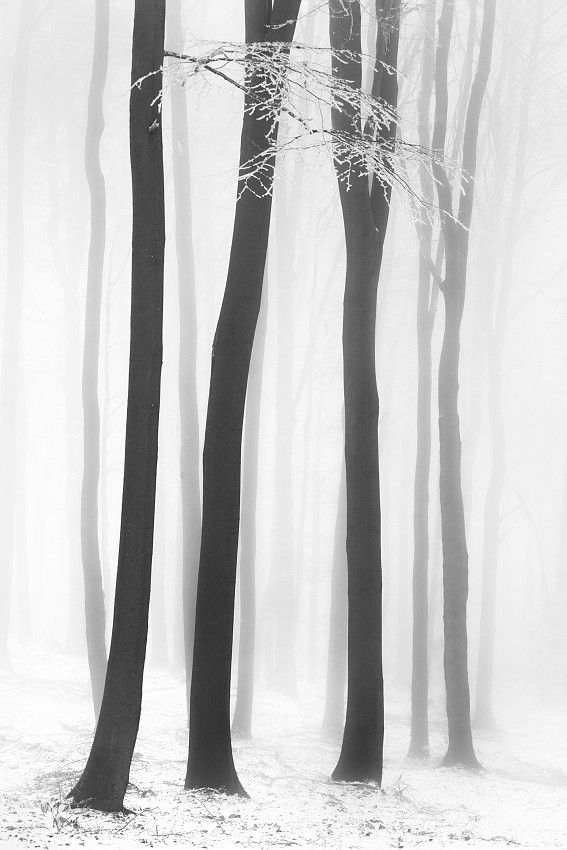 winter - woods - bare trees - illustration - sketch - print