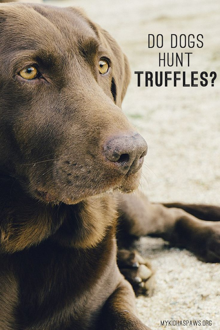 Dog Training Classes Bristol   dogpetsmart - wikidog.us.org