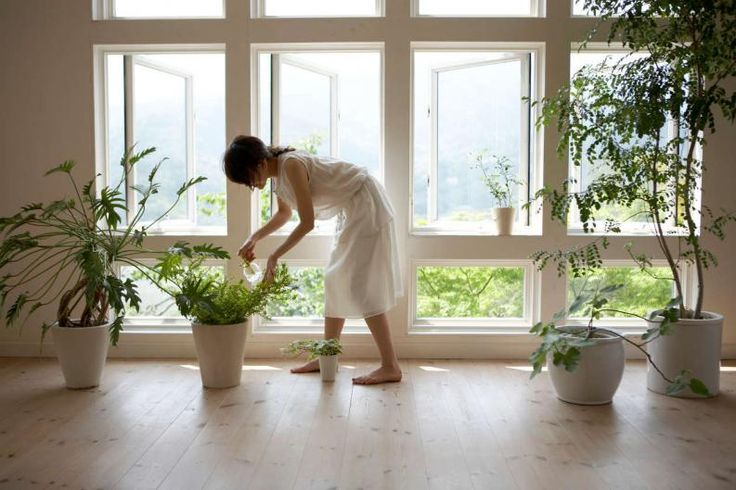 """Puede que creas en las supersticiones y te interese saberlo todo acerca de las plantas que atraen el amor y la buena fortuna, o quizá seas de esas personas que no hacen caso de lo que se suele llamar """"buena suerte"""" o """"energía positiva"""". De todos modos, en ambos casos se puede disfrutar y alegrar el hogar con"""