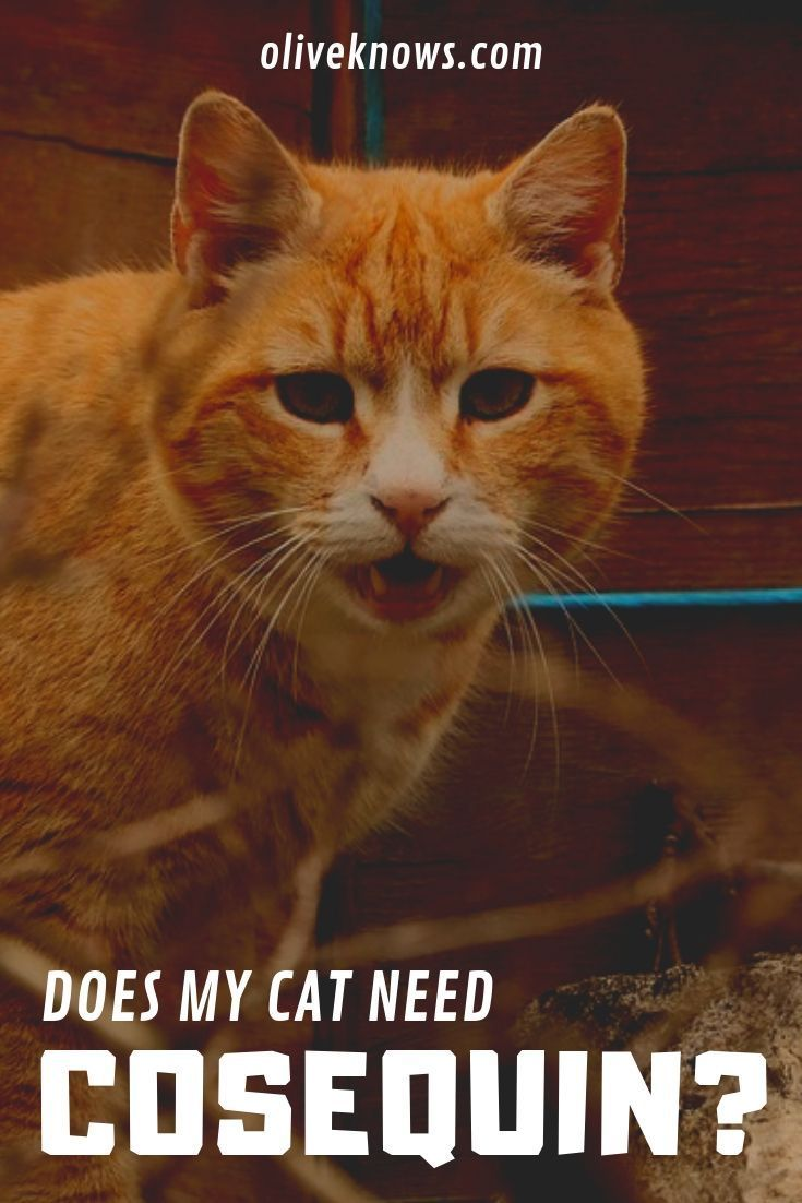 Does My Cat Need Cosequin Oliveknows Cat Training Cat Health Problems Cats