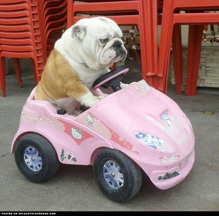 "❤ ""Fine MOM - I'll drive myself to the Dog Park --- even if I have to do it in a Hello Kitty car!"" ❤"