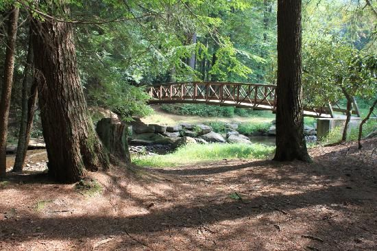 Cook Forest State Park – Cooksburg | Best Campgrounds in Pennsylvania | The Perfect Place You Would Surely Enjoy for Primitive Camping and Backpacking, Full-Service Campsites or Luxury Resorts and RV Parks!
