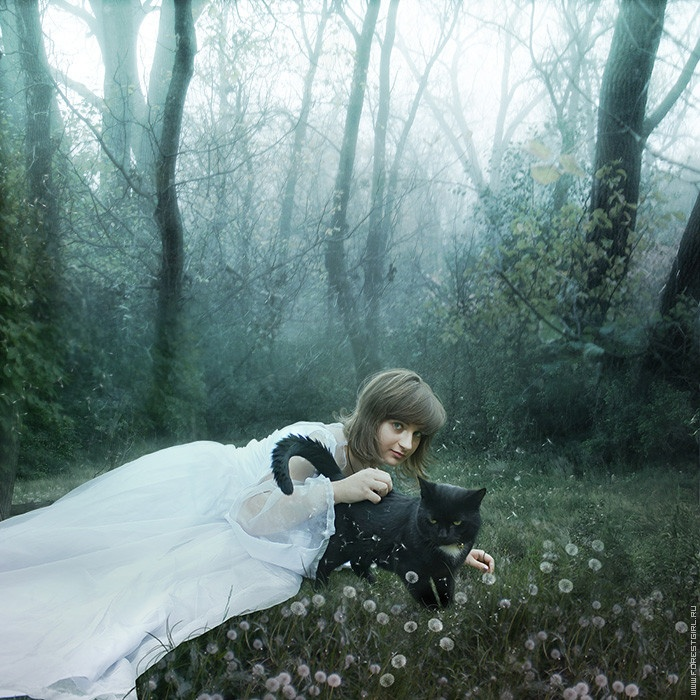.: Felin Photography, Cats Halloween Commun, Black Cats, Cat Halloween Commun Boards, I Love Cat, Cats And, White Dresses, Cat And, Photography Inspiration