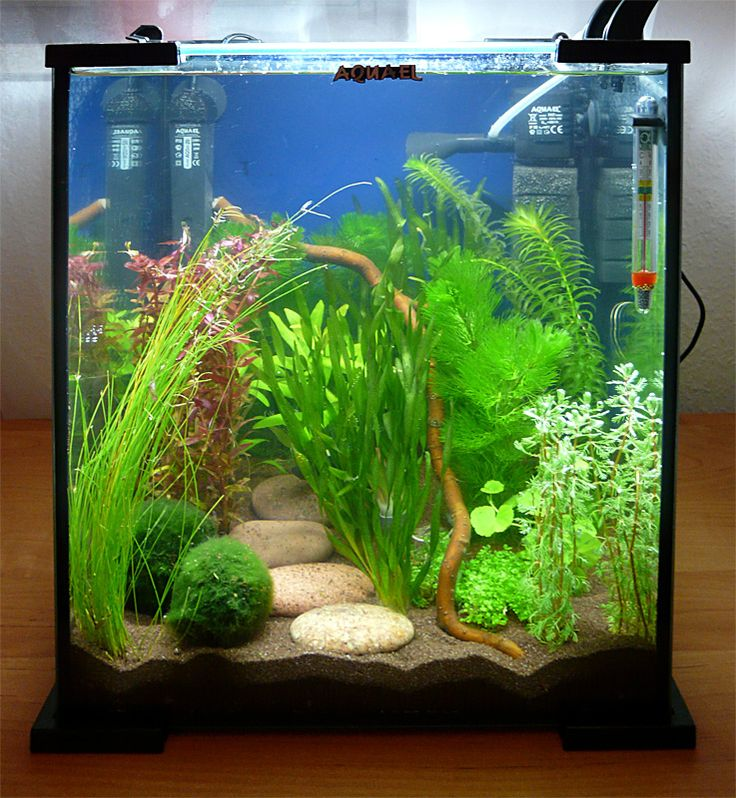 I'm thinking in the guest room tank I can do this on each side so that when its sitting on the table it doesn't look so bare on its sides