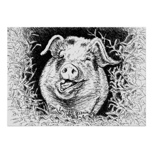 happy hog animal drawing poster
