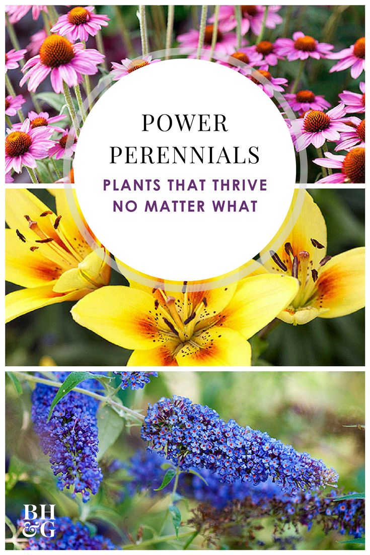 These perennials grow in tough soil and weather conditions, so you don't have to worry about your flower garden being ruined by Mother Nature! Check out our top picks, which include daylilies, Russian sage, coneflowers, and more! These beautiful flowers and plants will add color to your yard for years to come. #perennials #gardening #flowers #perennialgardenplanning #gardentips
