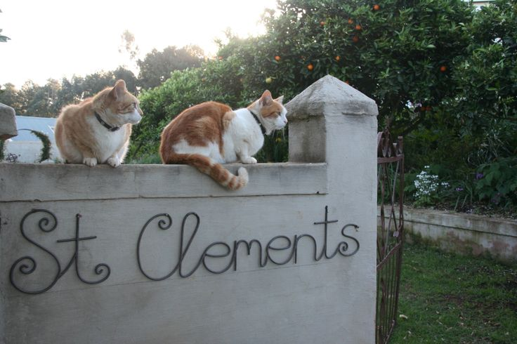 My daughter, Caity's picture of the cats on our garden wall