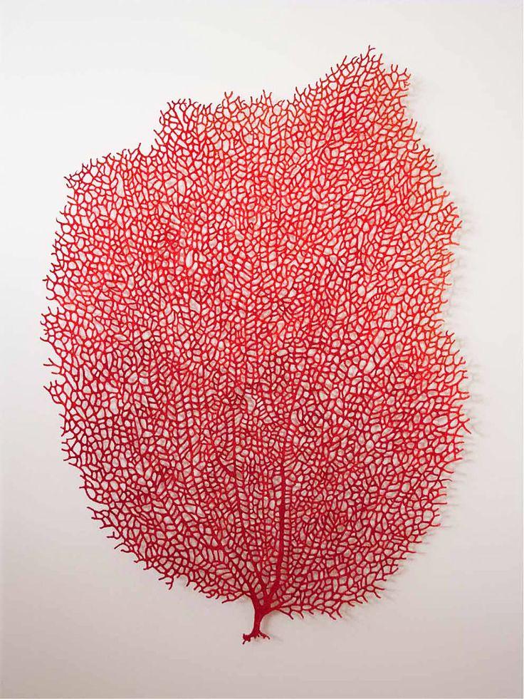 Meredith woolnough is australian visual artist who creates