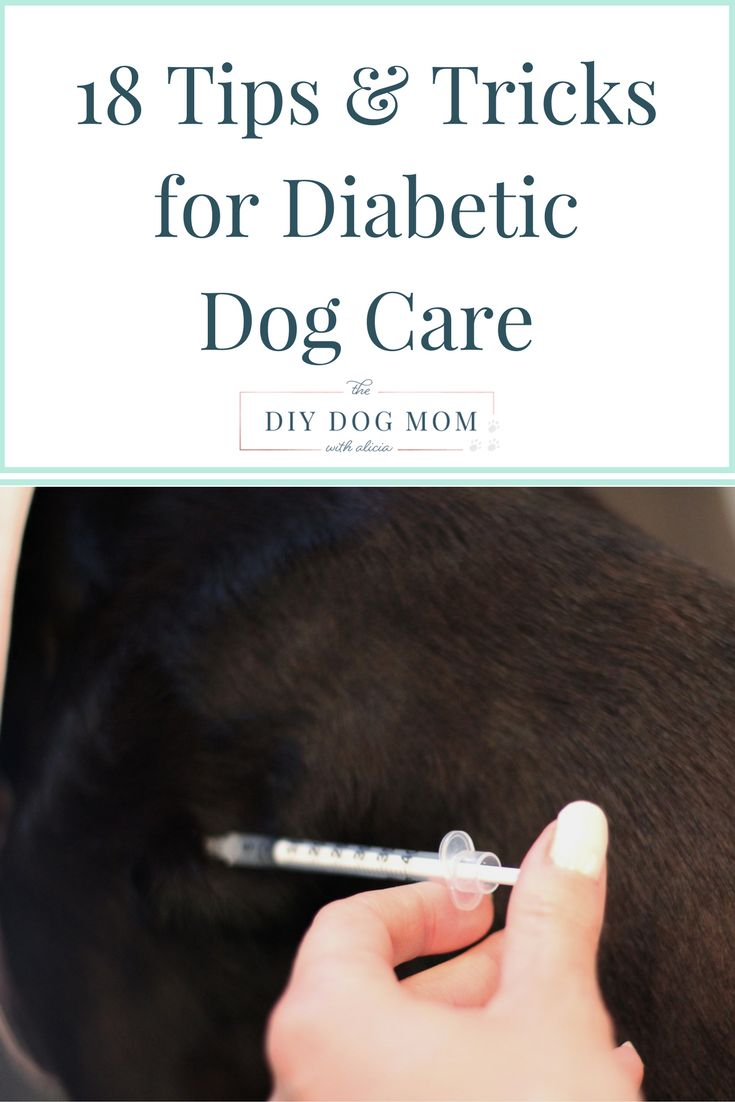 18 Tips & Tricks for Dogs with Diabetes | diabetic dog, diabetic dog treats, diabetic dog food, canine diabetes, dog diabetes, dog diabetes food