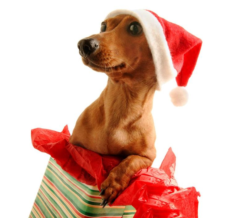 Christmas Animals | Cute & Funny New Images | Funny And Cute Animals