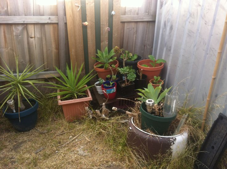 more succulents & some canna lillies