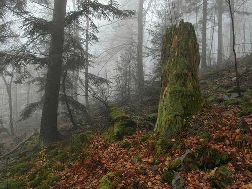 Polska, Świętokrzyski Park Narodowy National Park