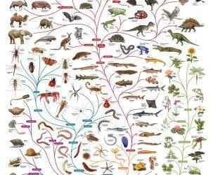 Charles Darwin tree of life poster