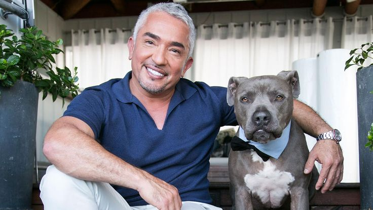 """""""Dog Whisperer"""" Cesar Millan is under investigation for possible animal cruelty stemming from an incident filmed for his """"Cesar 911"""" TV show, authorities said.  Sheriff's deputies and investigators with..."""