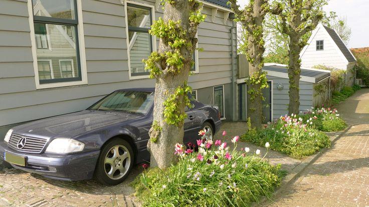 Tuinontwerp  Tuin 400 m2 - gezinstuin - voorjaar