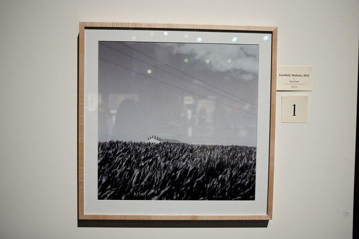'Cornfield, Waikato, 2013', photograph by Harry Culy