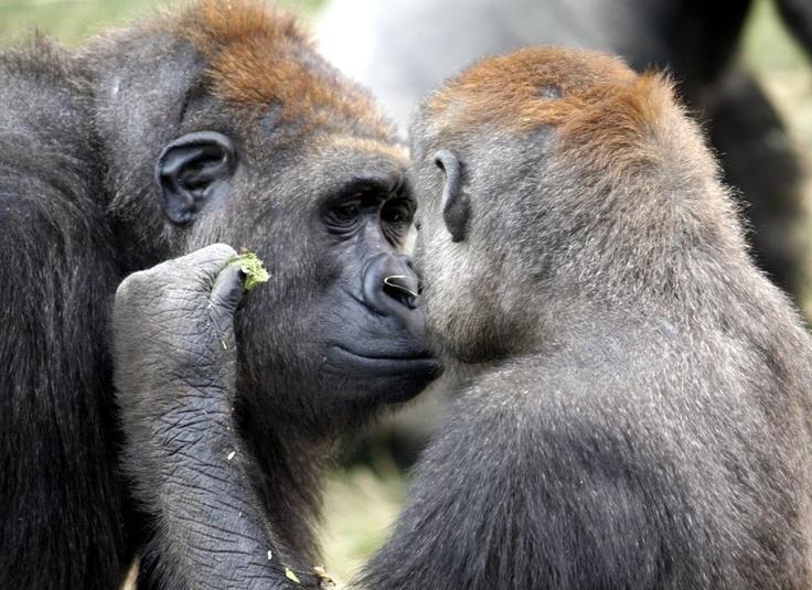 Monkey Faces - My Photo Blog