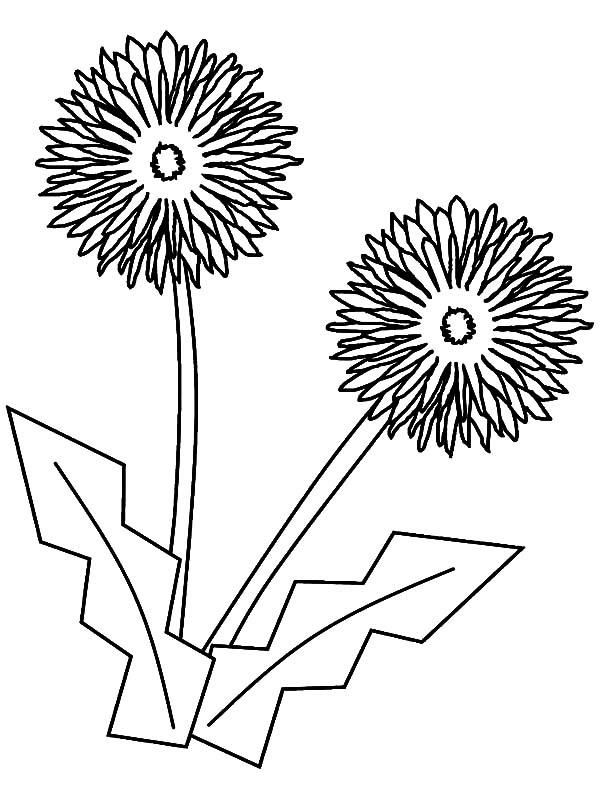 Read Moreaster Flower Origami Coloring Pages Coloring Pages For