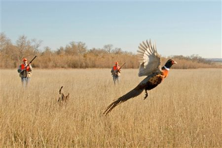 South Dakota Pheasant Hunting-One of my favorite weekends of the year!
