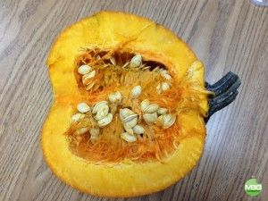 Exploring Pumpkins in Kindergarten #kinderchat