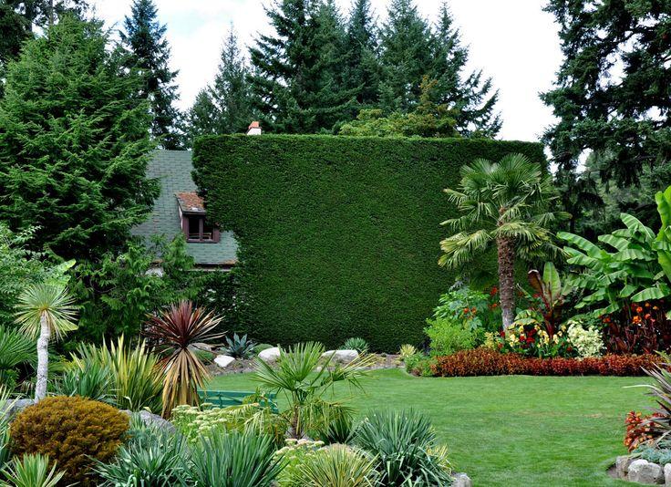Alison S Gardens Mediterranean Garden: 105 Best Images About Garden