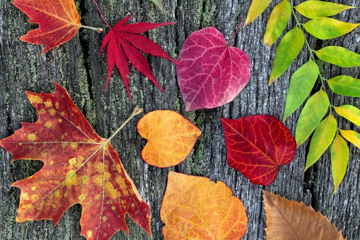 Abstract background of autumn leaves.