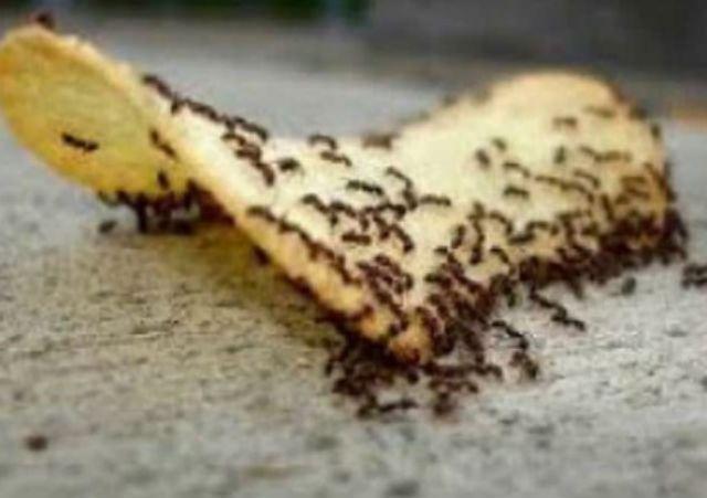 Ο πιο ΑΠΛΟΣ τρόπος για να διώξεις τα μυρμήγκια από το σπίτι σου τώρα!