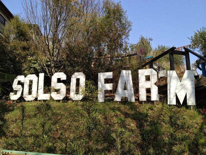 東名川崎インターを降りてしばらく車を走らせた場所に「SOLSO FARM」(ソルソファーム)はあります。