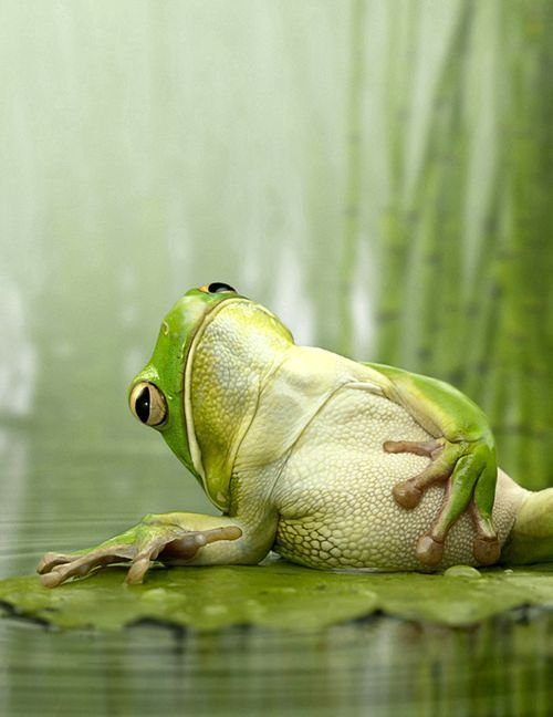 Freddies Froggies...
